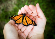 -butterfly-in-hand